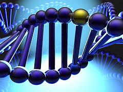 генов человека