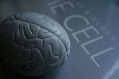 клеток мозге