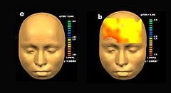 мозга использует человек