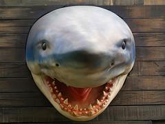 весит акула
