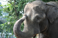 весит слон