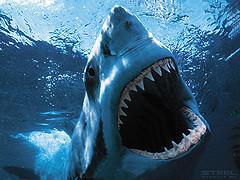 видов акул