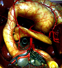 органов человека