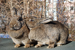 живут кролики
